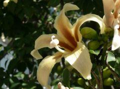 Fleur à identifier